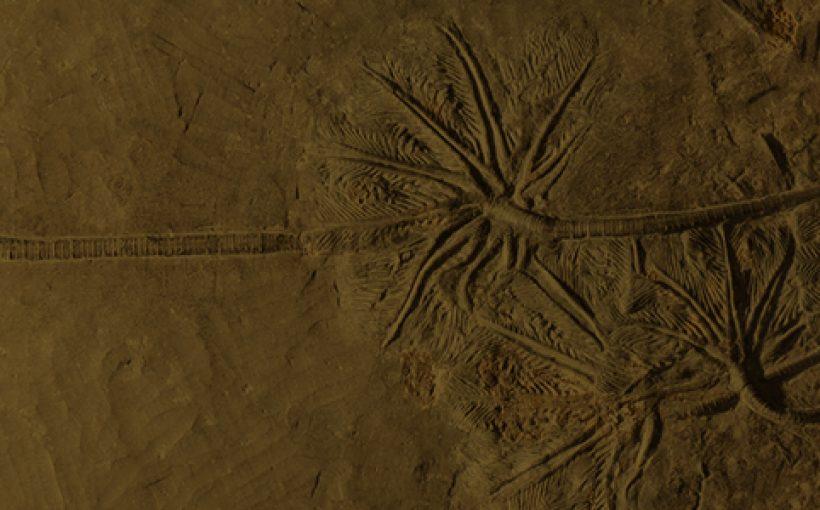 EPOS023 Arqueologia Comparada Eventtia Grand